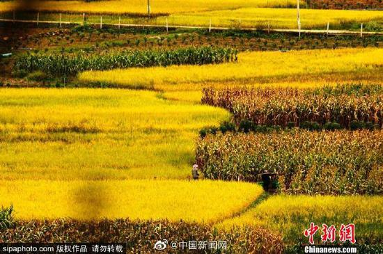 China marks second farmers' harvest festival