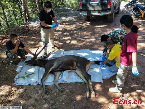 Deer found dead in Thailand with plastic bags in stomach