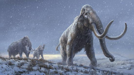Specimens of steppe mammoths provide important insights into giant Ice Age mammals